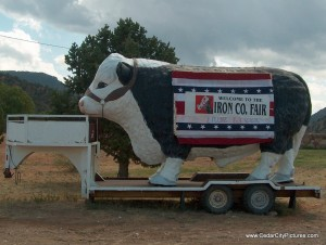 Iron County Fair Cow