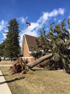 pine tree fell down lds institute damaged building wind cedar city